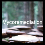 myco_remediation (26K)
